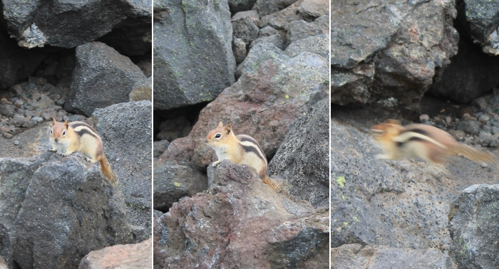 Several chipmunks were checking us out at the top, hoping for a snack.